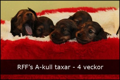 a_kull_tax_4v